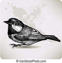 hand-drawing., vektor, illustration., titmouse, madár