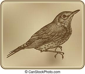 hand-drawing., vektor, madár, fieldfare, illustration.