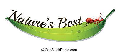 hangya, címke, legjobb, nature's