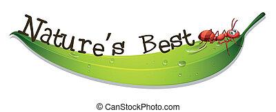 hangya, nature's, levél növényen, legjobb, címke