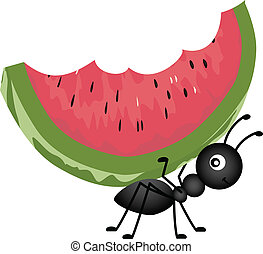 hangya, szállítás, görögdinnye