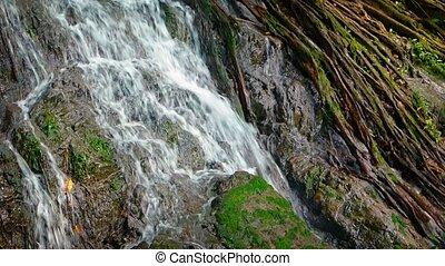 hangzik, fa, felett, mohás, vízesés, gyökér, hintáztatni, tropikus