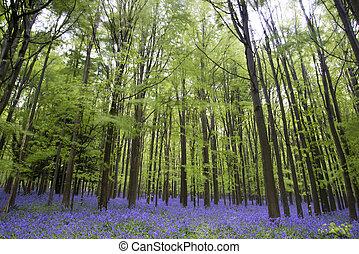 harangvirág, eredet, erdő, vibráló, táj, szőnyeg