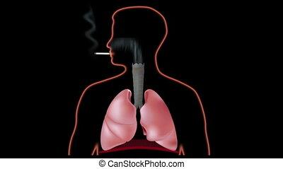 hatás, dohányzó, hd, tüdő
