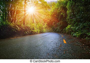 hegy, aszfalt, nap, esőerdő, páratartalom, fény, út, kilátás