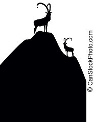 hegy kecske