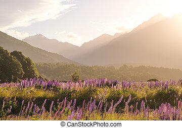 hegy lupine, lőtávolság, napnyugta, menstruáció, táj, kilátás