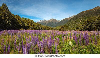 hegy völgy, színes, farkaszszerű, körképszerű, menstruáció, kilátás