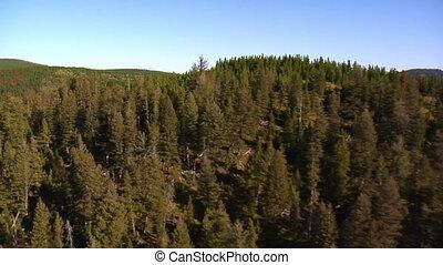 hegyek, antenna, dead fa, lövés, erdő