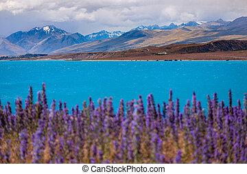 hegyek, előtér, tó tekapo, virágzó, táj, kilátás