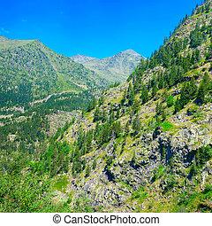 hegyek, erdő, befedett