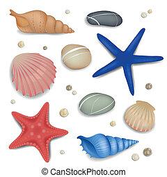 hegyikristály, starfishes, vektor, tengeri kagylók