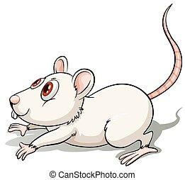 helyzet, patkány, ugrás