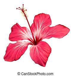 hibiszkusz, kivirul, virág, művészet, vektor