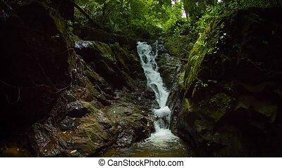 hintáztatni, felett, természetes, dzsungel, vízesés, hangzik, mohás