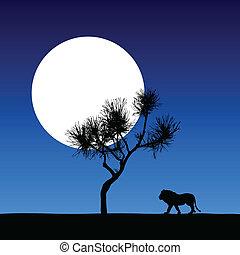 holdfény, illust, oroszlán, vektor