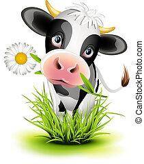 holstein, fű, tehén