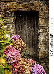 hortensia, antik, ajtó, fából való