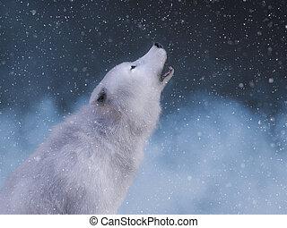 howling., vakolás, farkas, méltóságteljes, fehér, 3