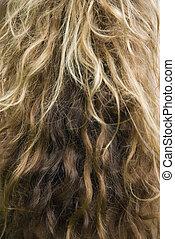 hullámos, hosszú, hair.