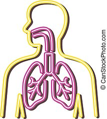 human-respiratory-system-neon