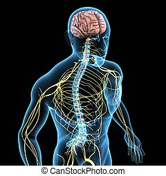 idegrendszer