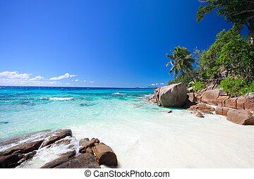 idillikus, seychelles, tengerpart