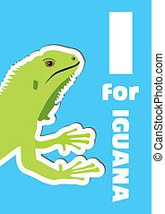 iguana, abc, állat