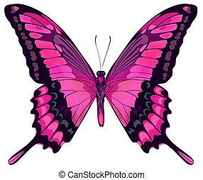 iillustration, háttér, elszigetelt, lepke, vektor, rózsaszínű, gyönyörű, fehér