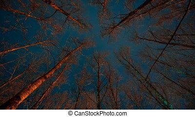 ijedős, múlás, idő, erdő, éjszaka