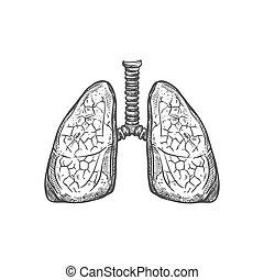 ikon, skicc, rendszer, emberi, tüdő, légzési