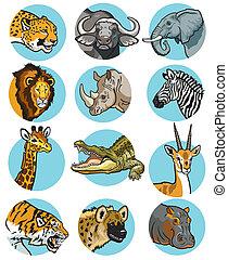 ikonok, állhatatos, állatok, vad