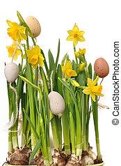 ikra, nárciszok, húsvét