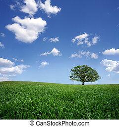 iktatott, fa, elhagyott, kék ég, elhomályosul, zöld white