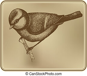 illustration., drawing., titmouse, vektor, kéz, madár