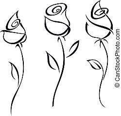 illustration., rózsa, elszigetelt, háttér., vektor, kivirul, fehér