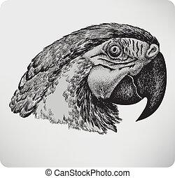 illustration., rajz, papagáj, kéz, vektor, madár
