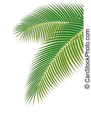 illustration., zöld, fa, háttér., vektor, pálma, fehér