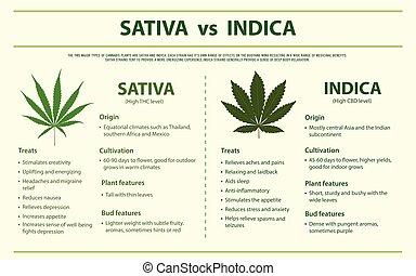 indica, infographic, vs, horizontális, sativa