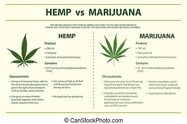 infographic, vs, horizontális, kender, marihuána