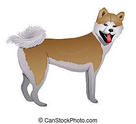 inu, akita, japán, kutya