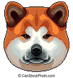 inu, kutya, elszigetelt, akita, vektor, portré, fénykép