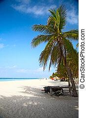 isla, mexikó, tengerpart, mujeres