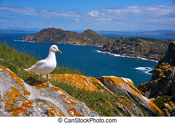 islas, balek, galicia, tenger, cies, sziget, sirály, madár
