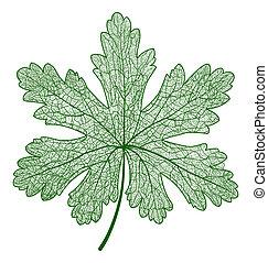isolated., makro, vektor, levél növényen, illustration.