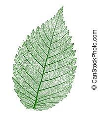 isolated., vektor, levél növényen