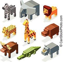 isometric, állhatatos, animals., vektor, betűk, afrikai, karikatúra, 3