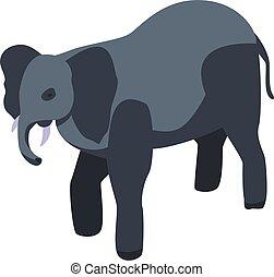 isometric, mód, állatkert, ikon, elefánt