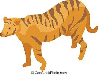 isometric, mód, állatkert, tiger, ikon