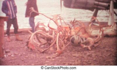 jávorszarvas, 1969, vadászat, északi-sark, holt, elgáncsol